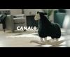 Teaser Coupe du Monde de rugby - Canal Plus (2011)